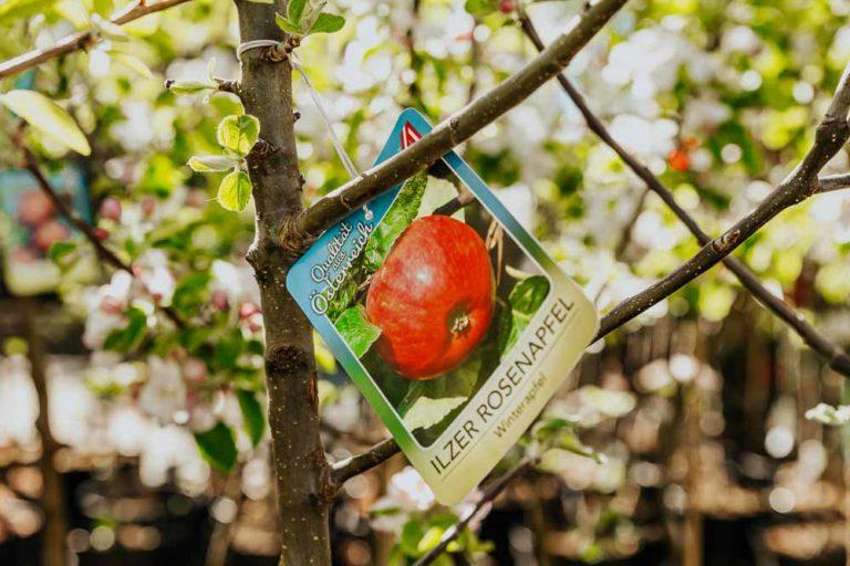 Gartentipps Baumschnitt
